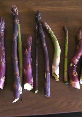 Asparagus! {TGP}