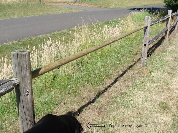 First Repaired Rail for Fence