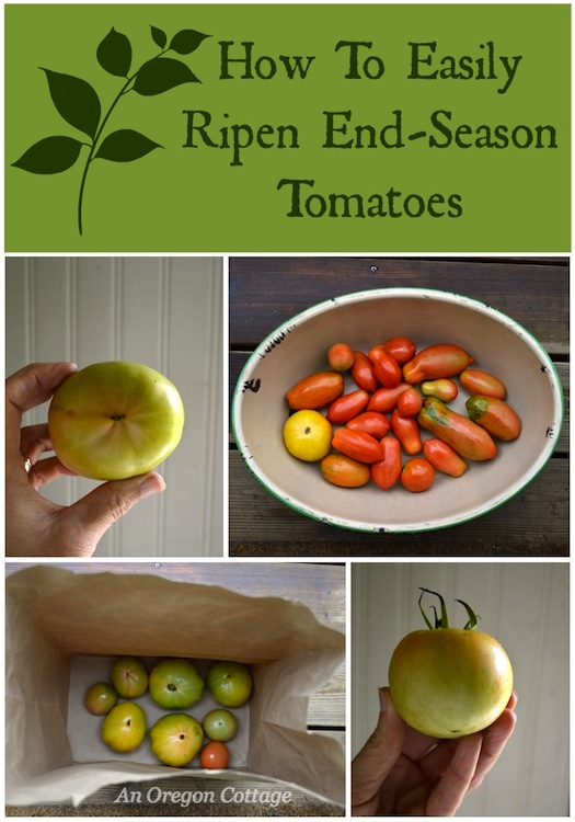 How to Easily Ripen End-of-Season Tomatoes :: An Oregon Cottage