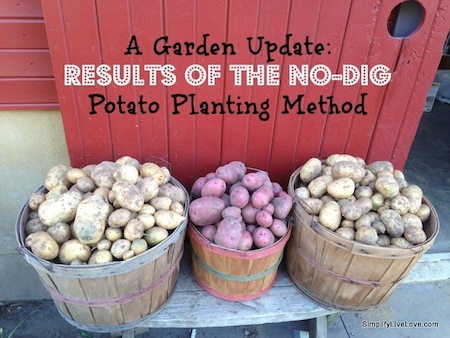 No-dig-Potato-Planting-Method