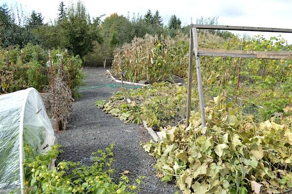 October 2013 Vegetable Garden