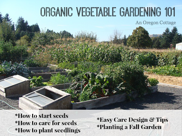 Organic Vegetable Gardening 101 - An Oregon Cottage
