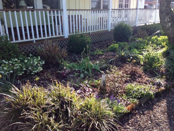 3-14 Front Garden Clean up