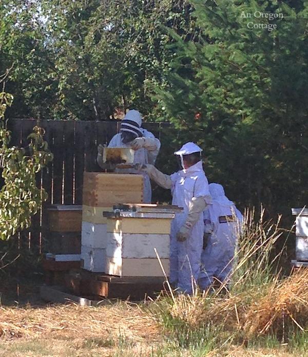 Harvesting Honey - An Oregon Cottage