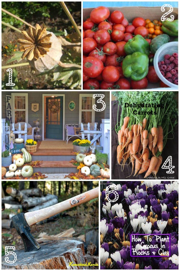 TGP Featured Posts Collage October.3