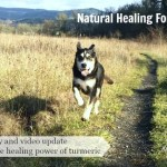 Natural Healing Through Turmeric for Dogs