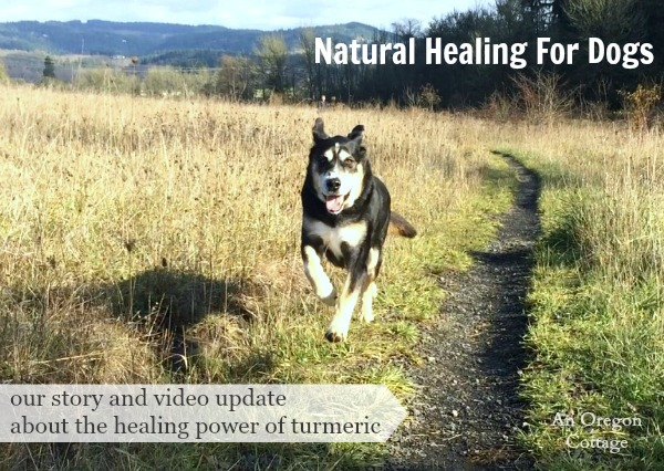 Our Story and Video of the Natural Healing of Turmeric For Dogs
