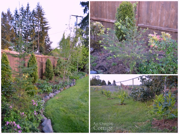 Newly Transplanted Trees and Shrubs