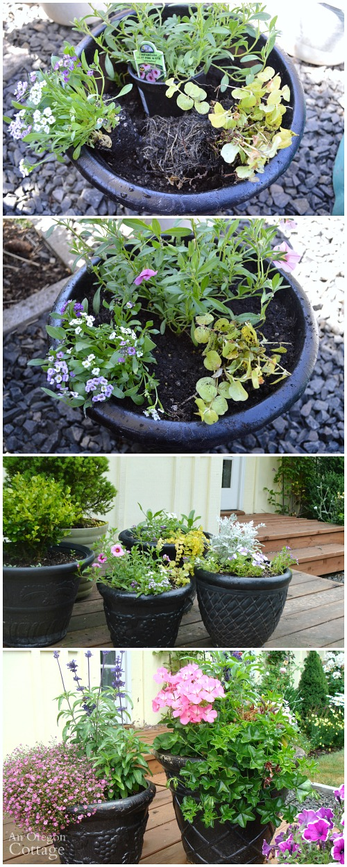 Tips for Planting Flower Pots Organically-Planting Thrillers, Fillers, and Spillers