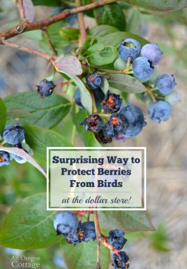 How to Scare Birds Away From Berries Naturally {Using Dollar Items}