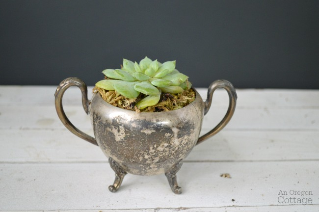 Succulent in vintage silver sugar bowl
