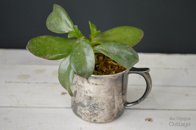 Succulents in vintage silver baby cup