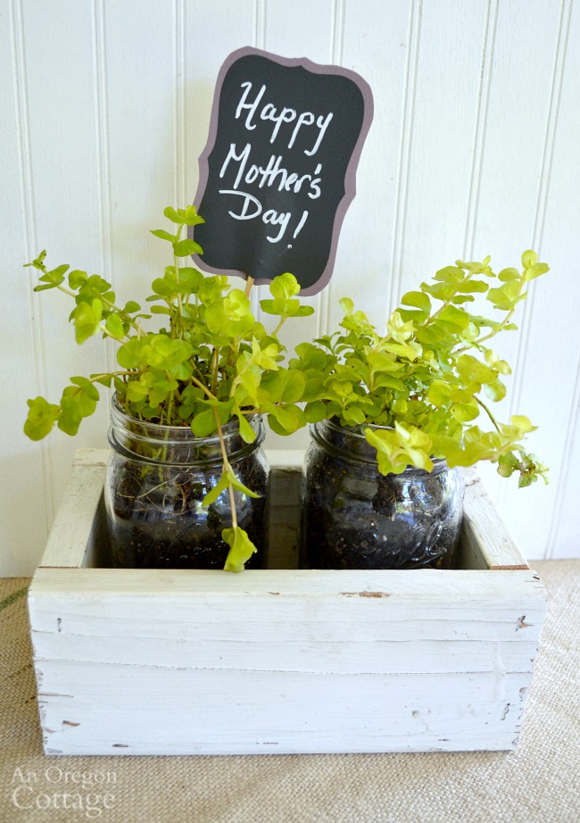 An easy, reclaimed wood box with mason jar planters makes a great gift!