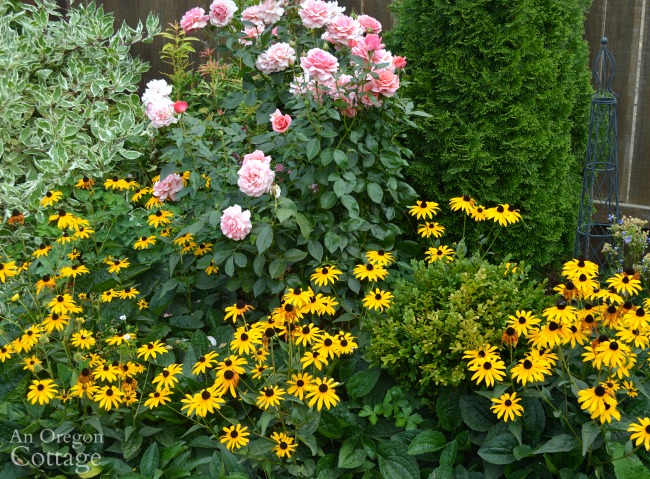Best plants for every garden-Black-Eyed Susan