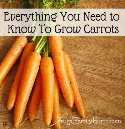 Carrot Growing Guide via Frugal Family Home