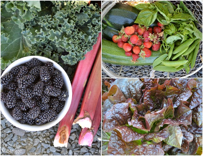 July 3 2016 Garden Harvest_lettuce-berries-kale-zucchini-and-more