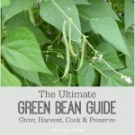 The Ultimate Green Bean Guide: Grow, Harvest, Cook & Preserve