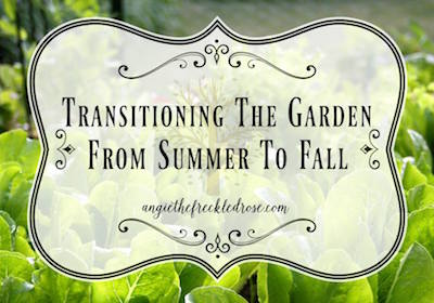 Transition garden from summer to fall via The Freckled Rose