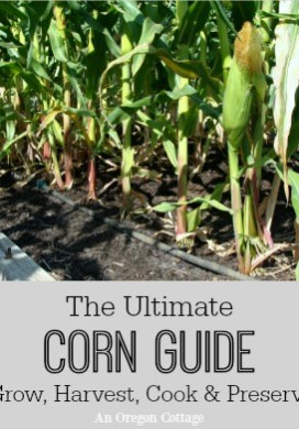 The Ultimate Corn Guide: Grow, Harvest, Cook & Preserve