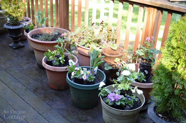 Arranging flower pots for spring planters