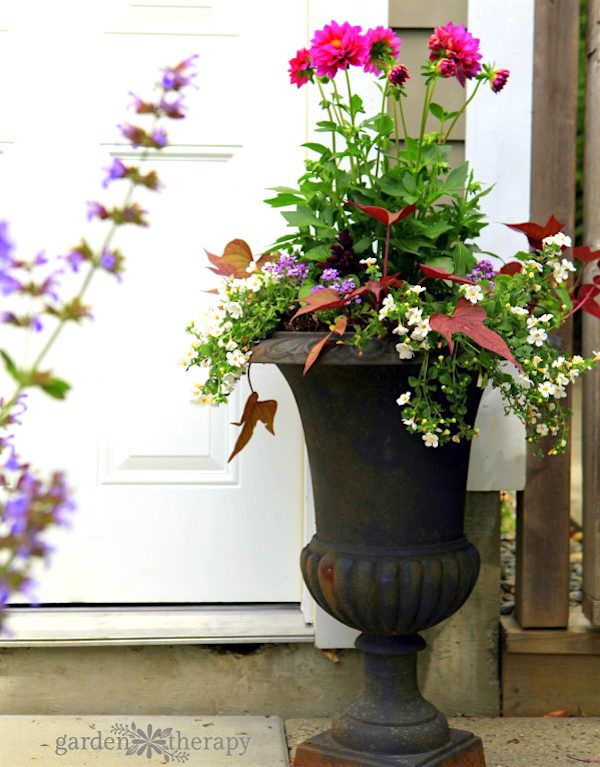 Sun-loving-planter-combination via Garden Therapy