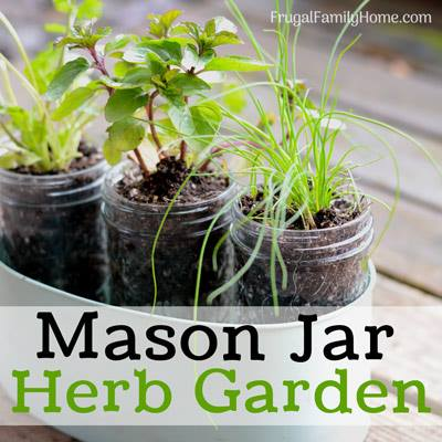 Mason jar herb garden at Frugal Family Home