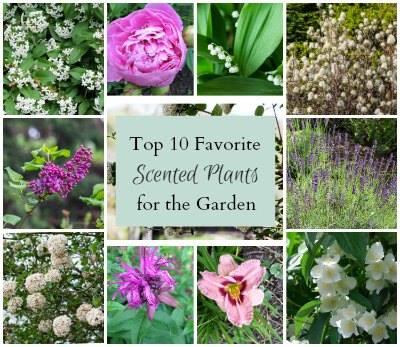 10 Favorite Scented Plants-Hearth and Vine