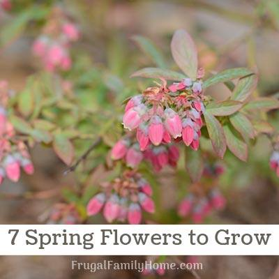 7 Favorite Spring Flowers at Frugal Family Home