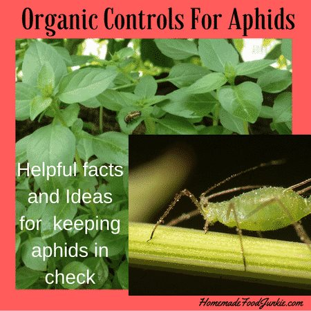 Organic Controls for Aphids at Homemade Food Junkie