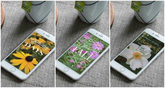 Fall Floral Phone Wallpapers-rudbedkia, aster, and anemone