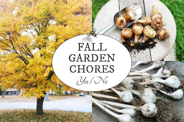 Fall gardening-Fall Garden Chores at Empress of Dirt