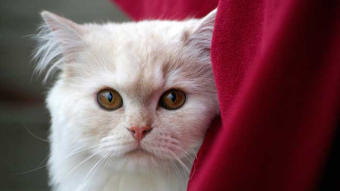 Nonviolent Communication doesn't treat allergy to cats