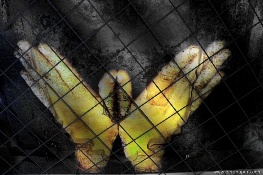 Χάος, ελευθερία και το φαινόμενο της πεταλούδας