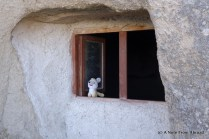 Gus in the window at Goreme