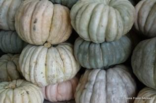Pumpkins or squash