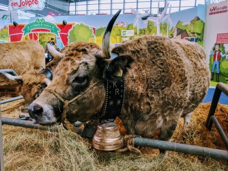 salon-de-lagriculture-belle-vache-cow