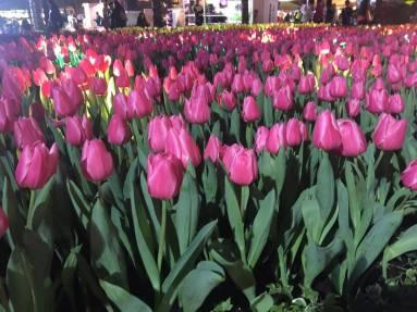 Hong Kong Flower Festival