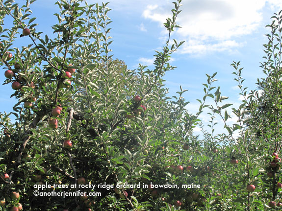 apple trees in maine