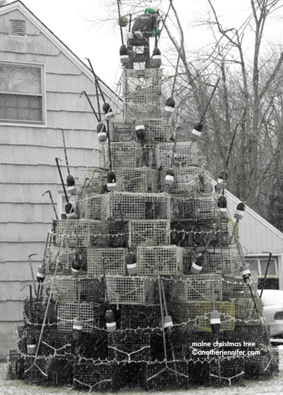 Maine Christmas Tree