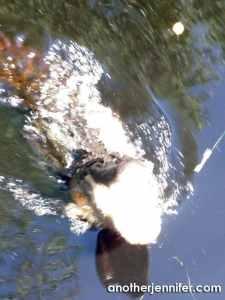 Wordless Wednesday: Biz's Alligator