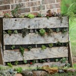 Diy Creating A Succulent Garden With A Pallet Another Jo Project