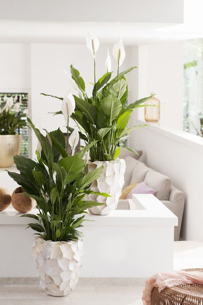 plants-small-spaces.jpg