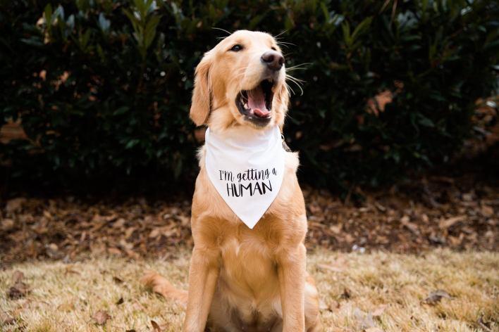 I'm Getting A Human Dog Bandana Pregnancy Announcement