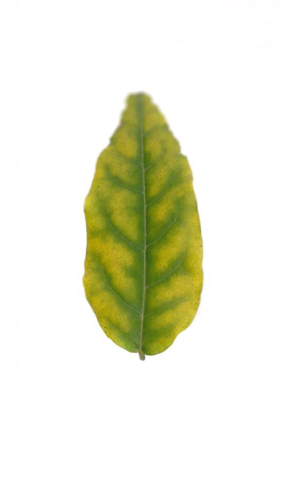 frunza verde toamna cismigiu