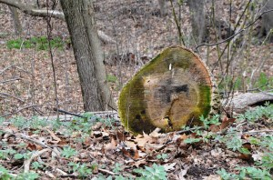 A tinder epitaph