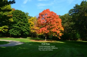 First Tree Haiku