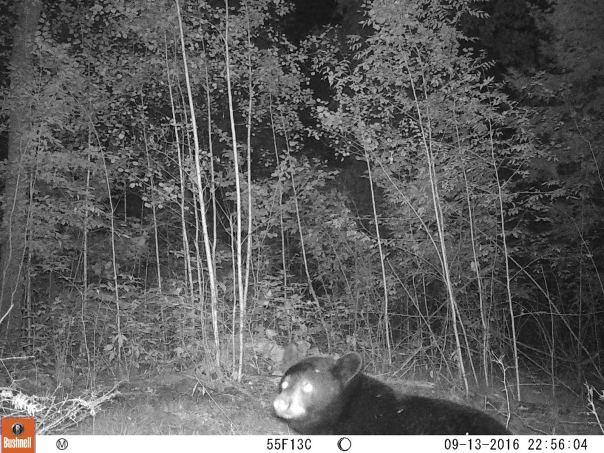 bear-in-the-lens