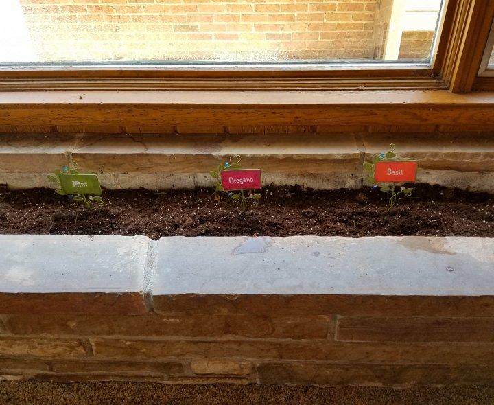 Planting seeds of hope in an indoor garden