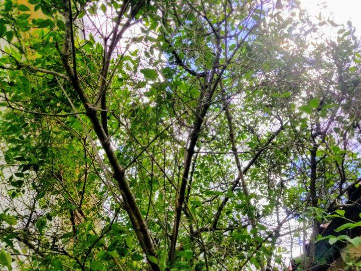 Lost lilacs