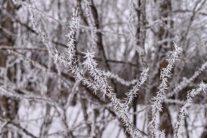 Frozen fog and rime time in Wisconsin